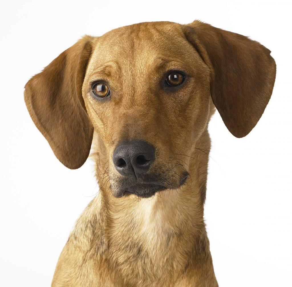 Was diesen Hersteller für Hundeleinen besonders macht
