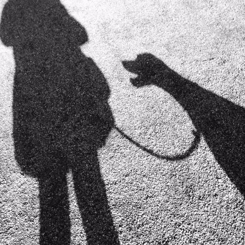 Warum es okay ist, Angst um Deinen Hund zu haben
