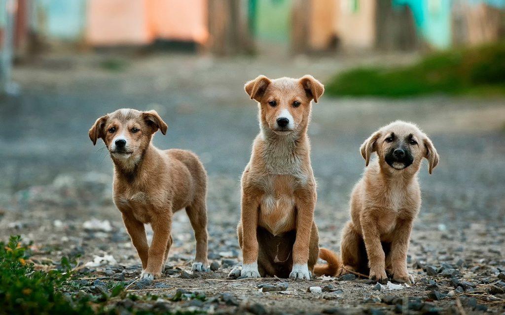Was will die Hundewelt als nächstes dringend herausfinden?