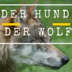 Der Hund und der Wolf