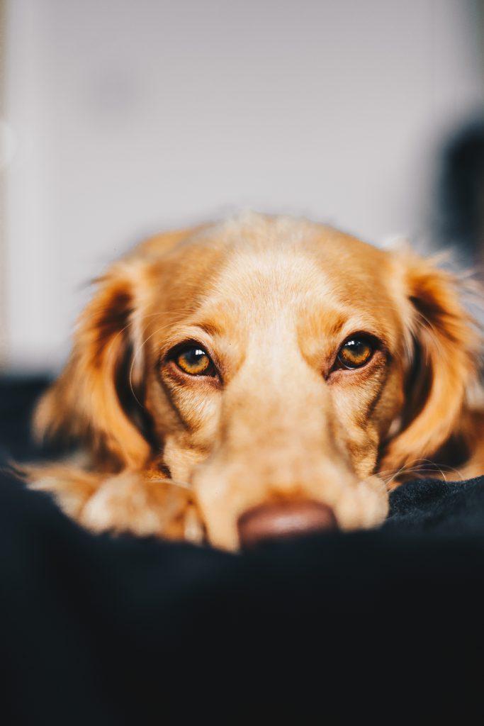 Hilfe für aggressive Hunde – das sind geeignete Schritte